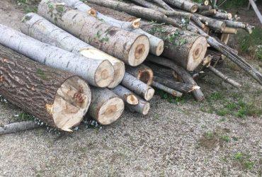 Vendo tronchi verdi tremoli