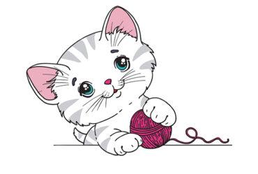 Regalo bellissimi gattini